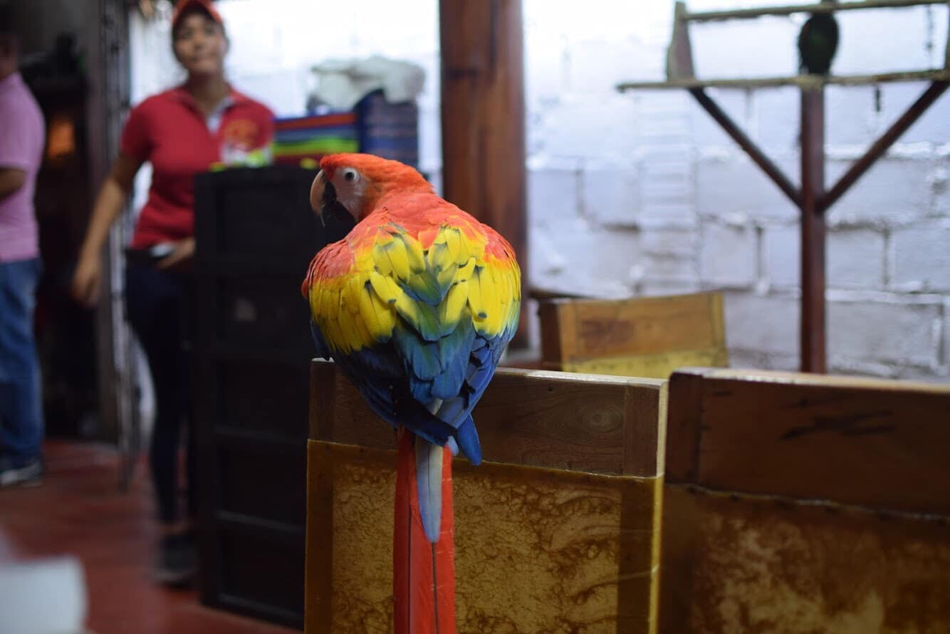 Travel to Cartagena Colombia Parrot